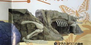 大阪 堺 ビッグバン 巨大ワニ